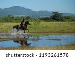 horse and jockey outdoor  | Shutterstock . vector #1193261578