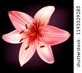 vector light pink lily isolated ... | Shutterstock .eps vector #1193329285