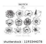 Sketch Floral Botany Set. ...