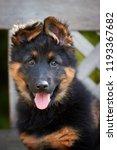 portrait of  bohemian shepherd... | Shutterstock . vector #1193367682
