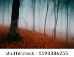 fog in autumn woods  mysterious ... | Shutterstock . vector #1193386255