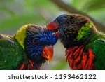 lories showing affection | Shutterstock . vector #1193462122