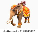 Elephant Has Beautiful And...