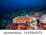 colorful corals and tropical... | Shutterstock . vector #1193563375