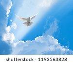 white dove flying in the sun... | Shutterstock . vector #1193563828