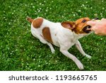 dog russell terrier with a ball ... | Shutterstock . vector #1193665765