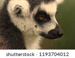 close up portrait of a... | Shutterstock . vector #1193704012