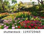 colorful flower in the garden. | Shutterstock . vector #1193725465