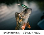 fishing background. trophy... | Shutterstock . vector #1193747032