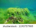underwater filamentous algae... | Shutterstock . vector #1193757985