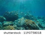 underwater seascape fish school ... | Shutterstock . vector #1193758018