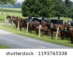 amish horse and buggy's    Shutterstock . vector #1193765338