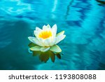 white lotus on surface of lake. ... | Shutterstock . vector #1193808088
