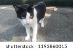 Stock photo little cat cute in the park 1193860015