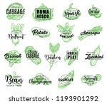 vegetables  salads and greenery ... | Shutterstock .eps vector #1193901292
