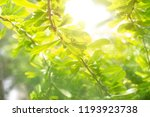 green leaf tree with sun light | Shutterstock . vector #1193923738