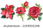 red anemone  rose  poinsettia ... | Shutterstock . vector #1193932198