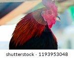 One Chicken Close Up