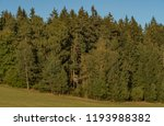 meadows and forest in sumava... | Shutterstock . vector #1193988382
