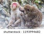 snow monkeys in a natural onsen ... | Shutterstock . vector #1193994682