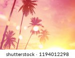 tropical palm tree with... | Shutterstock . vector #1194012298