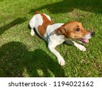 a little dog is playing with... | Shutterstock . vector #1194022162