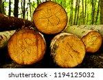 timber felling. harvesting... | Shutterstock . vector #1194125032