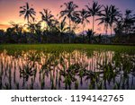 Rice Field  Coconuts Trees...