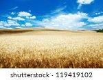 Hills Of Barley In Tuscany ...