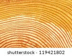 a cross section view of a log...