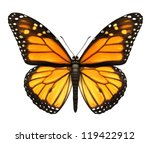 Stock photo monarch butterfly with open wings in a top view as a flying migratory insect butterflies that 119422912
