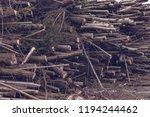 a huge heap of felled trees.... | Shutterstock . vector #1194244462