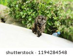 cat is lovely are staring in... | Shutterstock . vector #1194284548