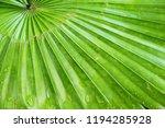 green leaf background  | Shutterstock . vector #1194285928