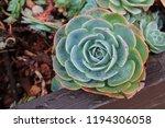 succulent plant in botanic... | Shutterstock . vector #1194306058