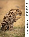 cheetah cub nuzzles mother and... | Shutterstock . vector #1194323512