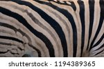 zebra skin  is the largest... | Shutterstock . vector #1194389365