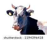 white and black cow isolated on ...   Shutterstock . vector #1194396418