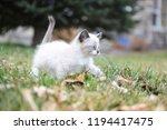 kitten cat cute | Shutterstock . vector #1194417475