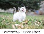 kitten cat cute | Shutterstock . vector #1194417595