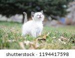 kitten cat cute | Shutterstock . vector #1194417598