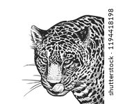 jaguar. realistic portrait of... | Shutterstock .eps vector #1194418198