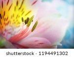 beautiful   olorful flowers... | Shutterstock . vector #1194491302