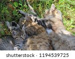 family of cats is asleep. rest... | Shutterstock . vector #1194539725