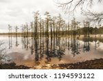 tall cypress trees line the... | Shutterstock . vector #1194593122