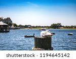 bird perched on a dock in... | Shutterstock . vector #1194645142