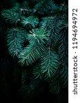 christmas  fir tree brunch...   Shutterstock . vector #1194694972