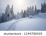 winter night landscape with a... | Shutterstock . vector #1194700435