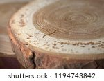 closeup round shape slices of... | Shutterstock . vector #1194743842