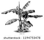 banana tree vintage hand draw... | Shutterstock .eps vector #1194753478